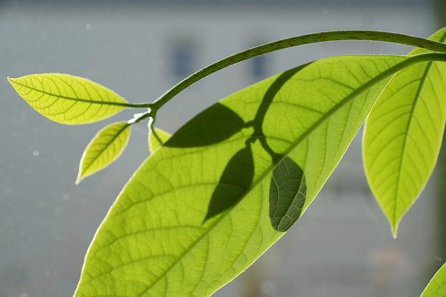 Pěstování rostlin z pecek